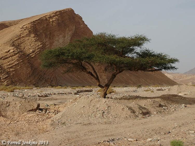 Wadi el Tor (commons.wikimedia.org)