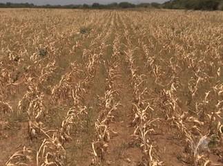Plantação na seca (acopaccaldeiraoaraci.blogspot.com)