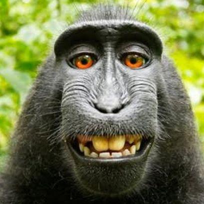 150926165742__85730600_monkey2