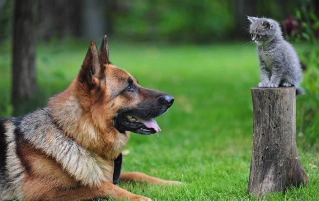 convivencia-entre-caes-e-gatos-1