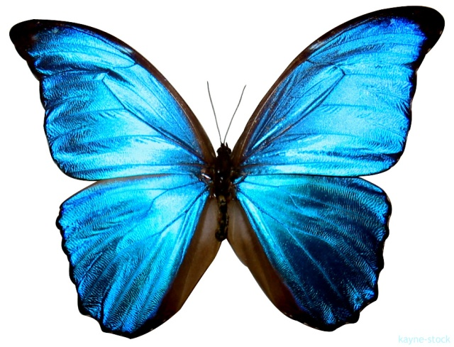 fotos-borboleta-1
